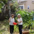 二十世紀が丘-菜園キュウリの収穫-20120711-001